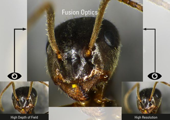 Csm Fusion Optics 3d 1ffa0eee22
