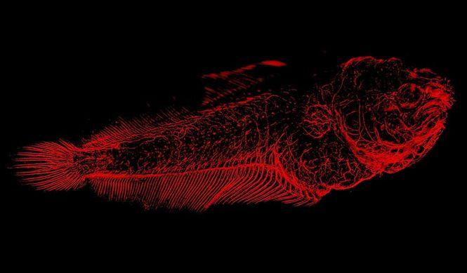 Csm Leica M205 Fc Fish Stitchin 9eafaa0a09